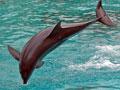 Delfin I